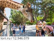 """Купить «Сафари-парк """"Тайган"""". Посетители смотрят на жирафа», фото № 12946079, снято 6 сентября 2015 г. (c) Юлия Бабкина / Фотобанк Лори"""