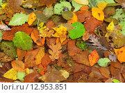 Грязные осенние листья. Стоковое фото, фотограф Станислав Самойлик / Фотобанк Лори