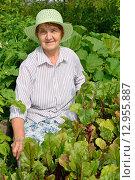Купить «Пожилая женщина улыбается рядом с грядкой молодой свёклы», фото № 12955887, снято 26 июля 2015 г. (c) Максим Мицун / Фотобанк Лори