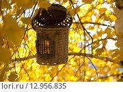Оригинальный скворечник на ветвях осенней березы. Стоковое фото, фотограф Юрий Волобуев / Фотобанк Лори