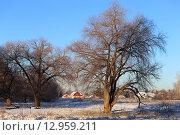 Загородный пейзаж с ивами (2014 год). Стоковое фото, фотограф Анатолий Матвейчук / Фотобанк Лори