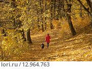 Купить «Женщина прогуливается с собакой по осеннему парку», эксклюзивное фото № 12964763, снято 29 октября 2015 г. (c) Svet / Фотобанк Лори