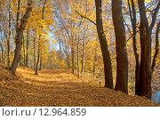 Купить «Осенняя аллея в парке, усыпанная опавшей жёлтой листвой», эксклюзивное фото № 12964859, снято 22 июля 2019 г. (c) Svet / Фотобанк Лори