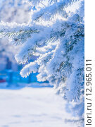 Купить «Ветви дерева, покрытые снегом», фото № 12965011, снято 17 ноября 2011 г. (c) Anelina / Фотобанк Лори