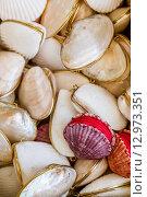 Купить «Gifts from Exotic Seashell and Cockleshell Piled Together», фото № 12973351, снято 27 марта 2019 г. (c) PantherMedia / Фотобанк Лори
