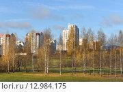 Купить «Золотая березы. Митинский ландшафтный  парк на фоне жилых домов. Москва», фото № 12984175, снято 29 октября 2015 г. (c) Валерия Попова / Фотобанк Лори