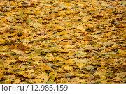 Осенние листья. Стоковое фото, фотограф Sergey Borisov / Фотобанк Лори