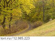 Купить «Дорожка в осеннем парке», фото № 12985223, снято 20 октября 2015 г. (c) Лариса Капусткина / Фотобанк Лори