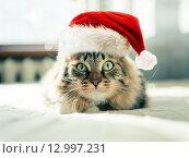 Купить «Рождественская кошка в красной шапке Санта-Клауса», фото № 12997231, снято 26 июня 2019 г. (c) Валерия Потапова / Фотобанк Лори