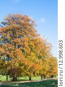 Купить «Осенние деревья», фото № 12998603, снято 22 октября 2015 г. (c) Татьяна Кахилл / Фотобанк Лори