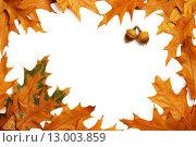 Рамка из осенних кленовых листьев на белом фоне. Стоковое фото, фотограф Фрибус Екатерина / Фотобанк Лори