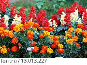 Купить «Variety of garden flowers», фото № 13013227, снято 19 марта 2019 г. (c) PantherMedia / Фотобанк Лори