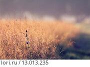 Купить «Landscape with rural summer field», фото № 13013235, снято 19 марта 2019 г. (c) PantherMedia / Фотобанк Лори