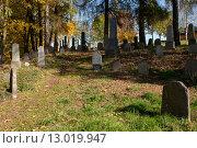Купить «forgotten and unkempt Jewish cemetery with the strangers», фото № 13019947, снято 23 июля 2019 г. (c) PantherMedia / Фотобанк Лори