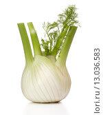 Купить «Fresh fennel bulb isolated on white background close up», фото № 13036583, снято 9 февраля 2015 г. (c) Natalja Stotika / Фотобанк Лори