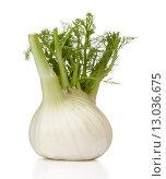 Купить «Fresh fennel bulb isolated on white background close up», фото № 13036675, снято 9 февраля 2015 г. (c) Natalja Stotika / Фотобанк Лори