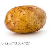 Купить «new potato tuber isolated on white background cutout», фото № 13037127, снято 5 августа 2015 г. (c) Natalja Stotika / Фотобанк Лори