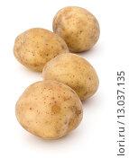 Купить «new potato tuber isolated on white background cutout», фото № 13037135, снято 6 августа 2015 г. (c) Natalja Stotika / Фотобанк Лори