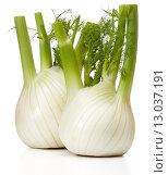 Купить «Fresh fennel bulb isolated on white background close up», фото № 13037191, снято 9 февраля 2015 г. (c) Natalja Stotika / Фотобанк Лори