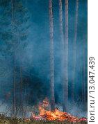 Огонь в лесу. Стоковое фото, фотограф Сергей Неудахин / Фотобанк Лори