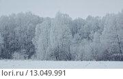 Купить «Деревья покрытые снегом», видеоролик № 13049991, снято 8 ноября 2015 г. (c) Владимир Кравченко / Фотобанк Лори