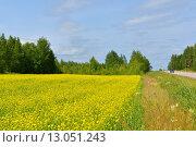 Купить «Рапсовое (лат. Brassica napus) поле и дорога вдалеке», фото № 13051243, снято 16 июля 2015 г. (c) Валерия Попова / Фотобанк Лори