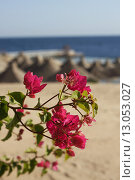 Купить «Цветы», фото № 13053027, снято 21 марта 2013 г. (c) Любецкая Марина / Фотобанк Лори