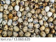 Фон из перепелиных яиц. Стоковое фото, фотограф fjodorov vladimir / Фотобанк Лори