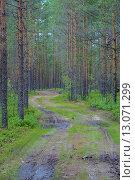 Дорога в лесу. Стоковое фото, фотограф Андрей Жуков / Фотобанк Лори