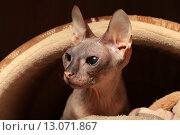 Купить «Кошка», фото № 13071867, снято 18 августа 2015 г. (c) Яна Королёва / Фотобанк Лори