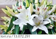 Купить «Amaryllis flowers bouquet», фото № 13072291, снято 24 марта 2014 г. (c) Юрий Брыкайло / Фотобанк Лори