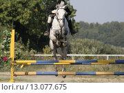 Лошадь на скаку. Стоковое фото, фотограф Дмитрий Пискунов / Фотобанк Лори