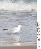Купить «Чайка на берегу», фото № 13079771, снято 13 октября 2015 г. (c) Ekaterina Andreeva / Фотобанк Лори