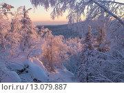 Заснеженный лес на закате солнца. Стоковое фото, фотограф Олег Вдовин / Фотобанк Лори