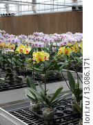 Купить «Flower nursery», фото № 13086171, снято 23 июля 2019 г. (c) PantherMedia / Фотобанк Лори