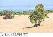Купить «sardinia country wild», фото № 13091771, снято 22 октября 2019 г. (c) PantherMedia / Фотобанк Лори