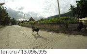 Купить «Собака и свиньи на улице горной деревушки», видеоролик № 13096995, снято 20 ноября 2015 г. (c) Потийко Сергей / Фотобанк Лори