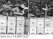 Пчеловоды работают с ульями.Черно-белая фотография. Стоковое фото, фотограф Андрей С / Фотобанк Лори