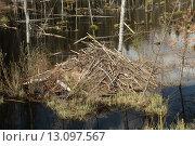 Купить «Бобровая хатка», эксклюзивное фото № 13097567, снято 17 мая 2014 г. (c) Самохвалов Артем / Фотобанк Лори
