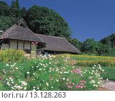 Купить «Cosmos, Private house, Yoshinaga, Okayama, Japan», фото № 13128263, снято 19 февраля 2019 г. (c) age Fotostock / Фотобанк Лори