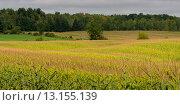 Купить «Crop on farmland in rural Quebec, Canada», фото № 13155139, снято 2 сентября 2013 г. (c) Ingram Publishing / Фотобанк Лори
