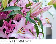 Купить «Amaryllis Belladonnas pink flowers.», фото № 13294583, снято 28 марта 2014 г. (c) Юрий Брыкайло / Фотобанк Лори