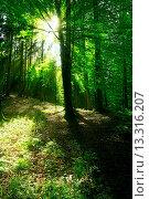 Купить «German summer wood», фото № 13316207, снято 15 июля 2020 г. (c) age Fotostock / Фотобанк Лори