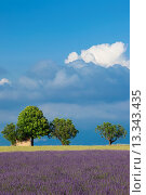 Купить «Farmer´s hut under the shade of a tree adjacent to lavender field near Valensole, Provence France», фото № 13343435, снято 19 сентября 2018 г. (c) age Fotostock / Фотобанк Лори