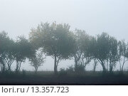 Купить «Baumreihe im Nebel, Deutschland, Row of trees in the fog, Germany», фото № 13357723, снято 16 июля 2019 г. (c) age Fotostock / Фотобанк Лори