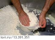 Купить «GOAT MILK CURDS are hand molded during the CHEESE MAKING PROCESS at JUNIPER GROVE FARM _ REDMOND, OREGON», фото № 13391351, снято 3 июня 2020 г. (c) age Fotostock / Фотобанк Лори