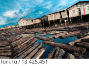 Купить «Logs from the Pacific rainforest float in the water in a stilt house area close to Tumaco, Colombia, 11 June 2010  Tens of sawmills located on the banks...», фото № 13425451, снято 12 июня 2010 г. (c) age Fotostock / Фотобанк Лори