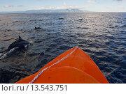 Купить «Dolphins swimming with a boat, Savo Island, Solomon Islands, Pacific», фото № 13543751, снято 18 марта 2019 г. (c) age Fotostock / Фотобанк Лори