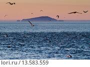Купить «Sunrise fata morgana mirage with dolphins and birds, Isla San Pedro Martir, Gulf of California Sea of Cortez, Baja California, Mexico, North America», фото № 13583559, снято 17 октября 2018 г. (c) age Fotostock / Фотобанк Лори