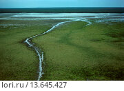 Купить «Swim channels created by Swamp buffalo movement allows saltwater intrusion, Top End, Northern Territory, Australia», фото № 13645427, снято 23 января 2020 г. (c) age Fotostock / Фотобанк Лори